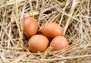 Nutritional Value Of A Free Range Egg VS. Caged Hen Eggs...