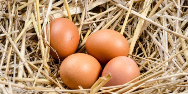 Nutritional Value Of A Free Range Egg VS. Caged Hen Eggs...